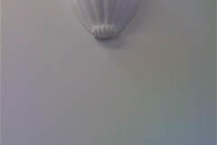 Plaster Shell Light